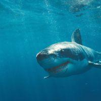 Shark Attack 3: Megalodon (2002) ล่า...เขี้ยวสมุทรมรณะ 3