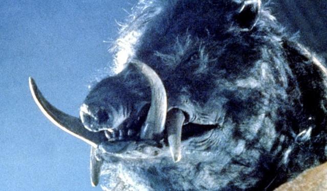 razorback-1984